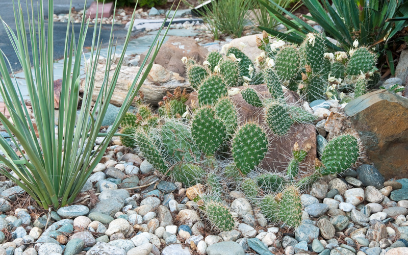 How Does The Idea Of A Cactus Garden Make You Feel? It Probably Depends On  How Familiar You Are With Cactus Plants. This Type Of Garden Is Not Just  For The ...